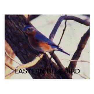 東のブルーバード ポストカード