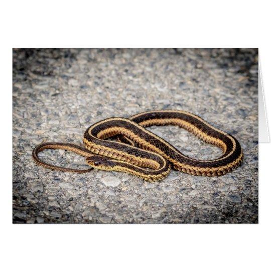 東のリボンヘビ(ガーター・ヘビ) グリーティングカード