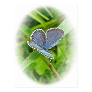 東の後につかれた青い蝶調整項目 ポストカード