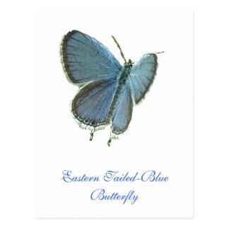 東後につかれた青い蝶 はがき