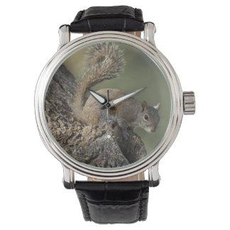 東灰色リス、か灰色のリス 腕時計