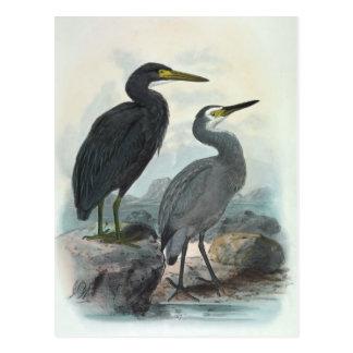 東礁の白鷺およびWhitefaced鷲 ポストカード