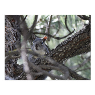 松の木のリス ポストカード