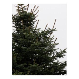 松の木の上 ポストカード