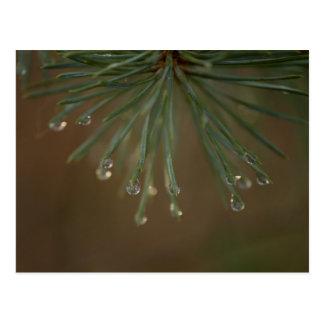 松の木の低下 ポストカード
