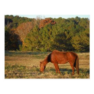 松の木を持つブラウンの馬 ポストカード