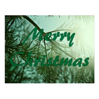 松の木メリーなchristmas.jpg ポストカード