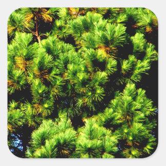 松の木 スクエアシール