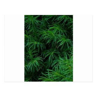 松の木 ポストカード