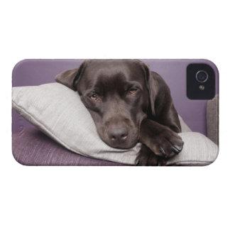 枕で疲れているチョコレートラブラドル・レトリーバー犬犬 Case-Mate iPhone 4 ケース