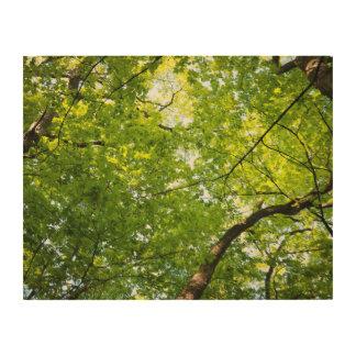 林冠の木の壁の芸術の下 ウッドウォールアート