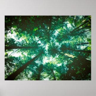 林冠 ポスター