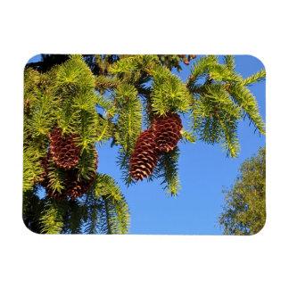 枝が付いている自然の森林写真の磁石 マグネット