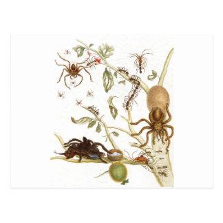 枝のくも、蟻およびハチドリの… ポストカード