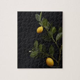 枝のまだレモン ジグソーパズル