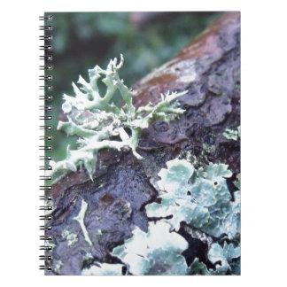 枝のカシのコケの地衣 ノートブック