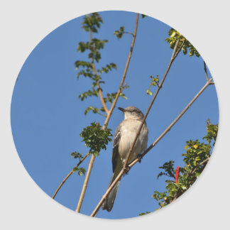 枝のマネシツグミ ラウンドシール