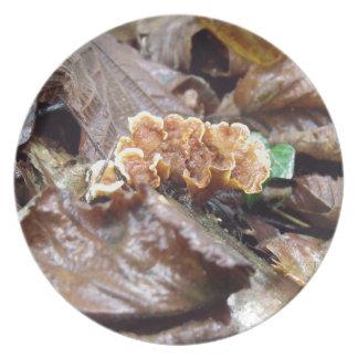 枝の森林菌類 プレート