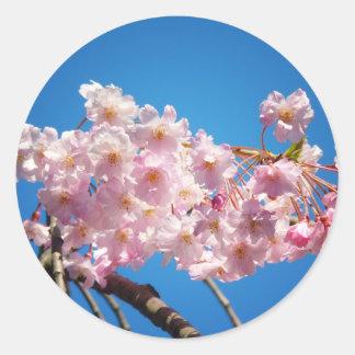 枝の淡いピンクの桜 ラウンドシール