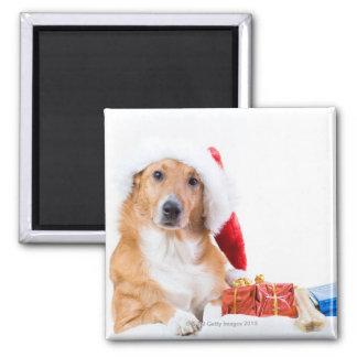 枝角およびカラフルのギフトを持つクリスマス犬 マグネット