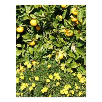 柑橘類およびEuryopsの郵便はがき ポストカード