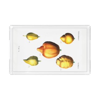 柑橘類のトレイ アクリルトレー
