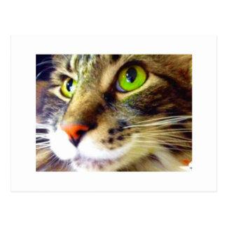 """""""柔らかいこんにちは""""かわいい猫の郵便はがきを言います ポストカード"""