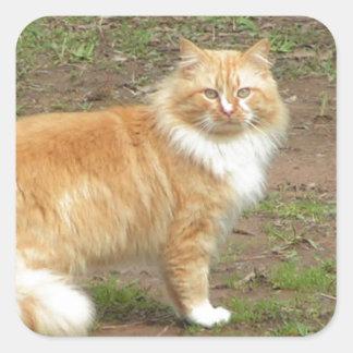 柔らかいオレンジおよび白い子猫 スクエアシール