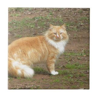 柔らかいオレンジおよび白い子猫 タイル