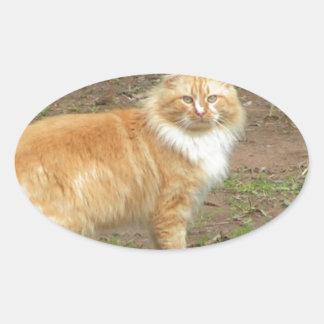 柔らかいオレンジおよび白い子猫 楕円形シール