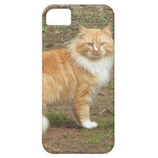 柔らかいオレンジおよび白い子猫 iPhone SE/5/5s ケース