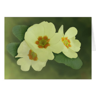 柔らかいサクラソウによっては挨拶状が開花します カード