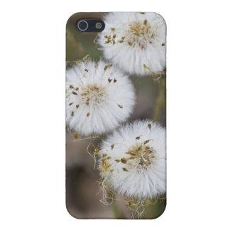 柔らかいタンポポ iPhone 5 ケース