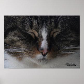 柔らかい子猫、暖かい子猫… ポスター