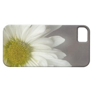 柔らかい白いデイジーのiPhone 5の穹窖 iPhone SE/5/5s ケース