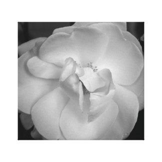 柔らかい白い花、美しいプリント、バーリントン、NJ キャンバスプリント
