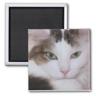 柔らかい白CATの磁石 マグネット