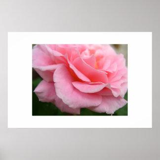 柔らかい花びら ポスター
