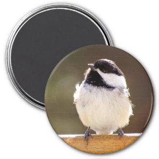 柔らかい《鳥》アメリカゴガラの磁石 マグネット