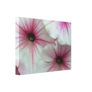 柔らかく、敏感で白く、ピンクのペチュニア キャンバスプリント