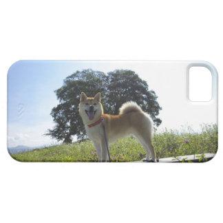 柴犬 iPhone SE/5/5s ケース