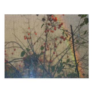 柿および虹 ポストカード