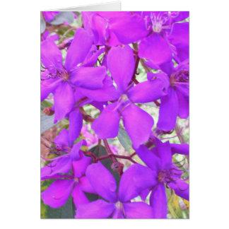 栄光の木(Tibouchina) カード