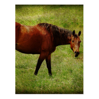 栗毛の馬 ポストカード