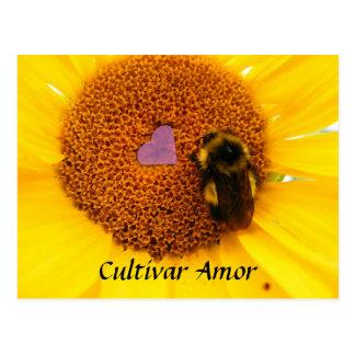 栽培品種Amor ポストカード