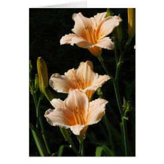 桃色の開花 グリーティングカード