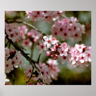 桜の木 ポスター