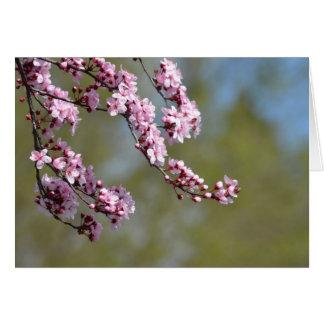 桜の花 グリーティングカード