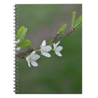 桜の花 ノートブック