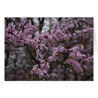 桜 カード
